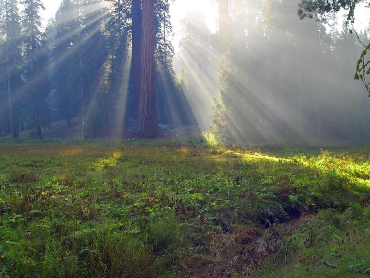 Sun rays pierce the tree line in a forest meadow.