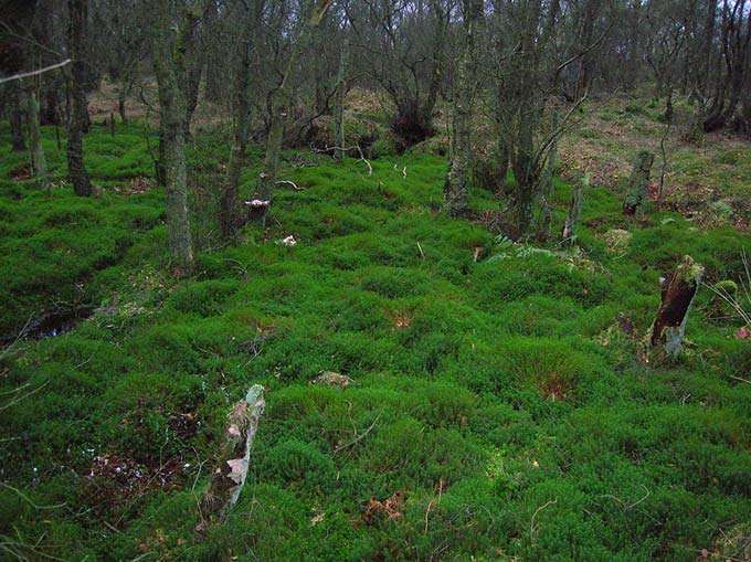 A large bed of moss grows on a forest floor.