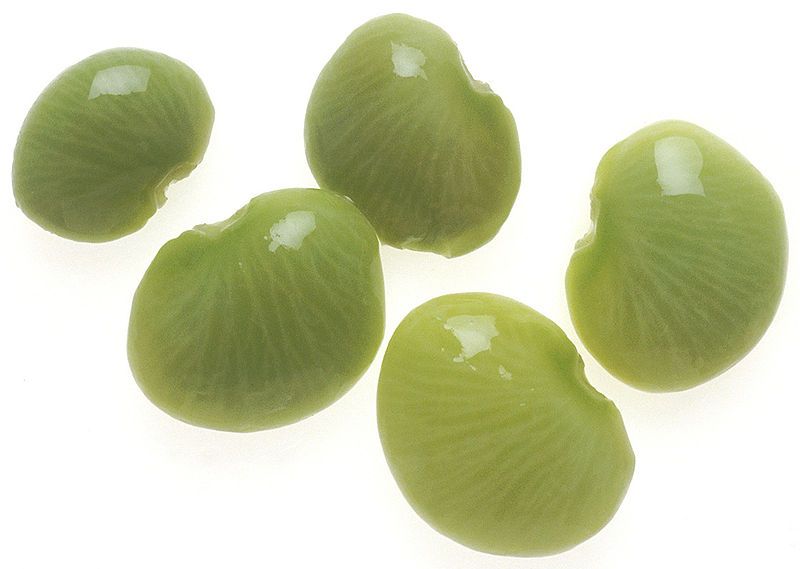 This high quality image looks down on five lima beans set against a white background.