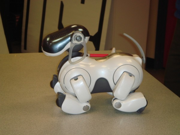 This is a side on image of the popular robot dog known as AIBO (standing for Artificially Intelligent Robot). Built by Sony, AIBO is capable of displaying emotions and can perform a large number of voice activated commands including speech, dancing, soccer and a number of tricks with a specially designed bone.